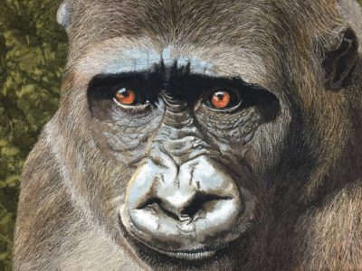 Janine Heschl, Gorilla