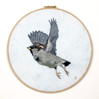 Janine Heschl Sparrow in fligth